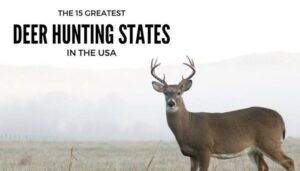 The 15 Greatest Deer Hunting States In The United States