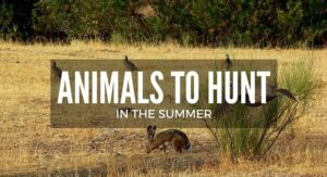 What Animals Can You Hunt In The Summer