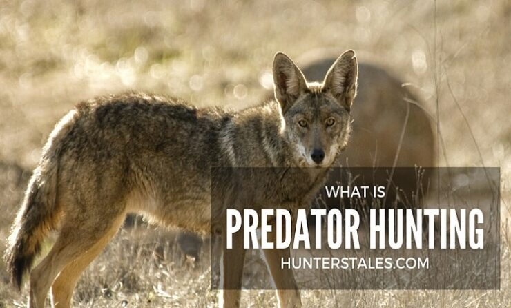 What Is Predator Hunting? Everything You Need To Know