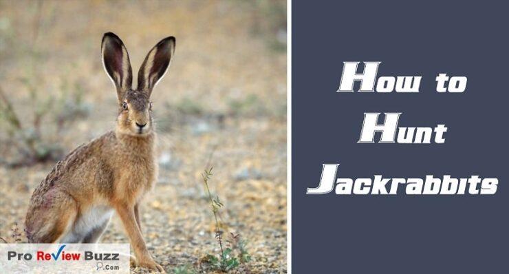 How to Hunt Jackrabbits