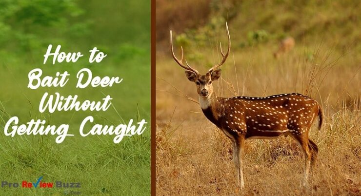 How to Bait Deer Without Getting Caught