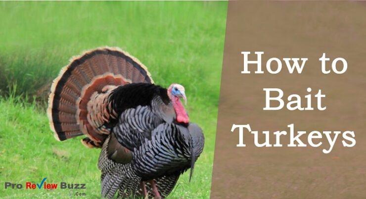 How to Bait Turkeys