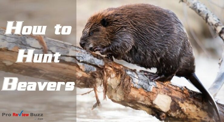 How to Hunt Beavers