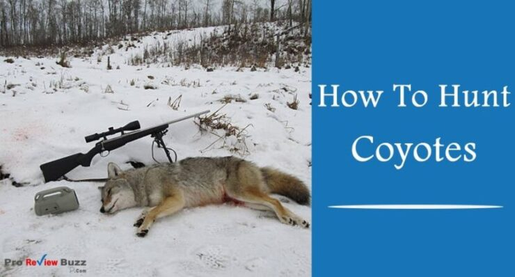 How To Hunt Coyotes