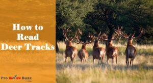 How to Read Deer Tracks
