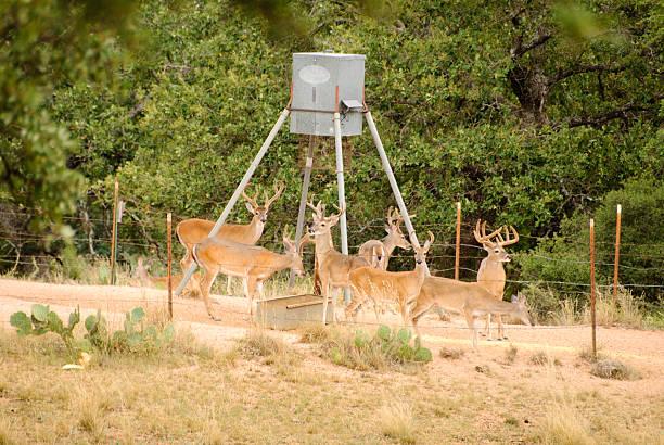 how to hang a deer feeder